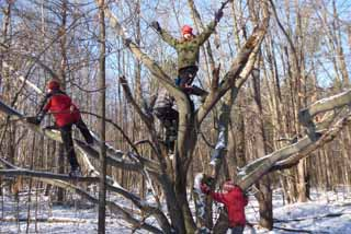Photo of kids climbing beech tree