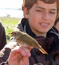 Photo of Macouner holding a just-banded Hermit Thrush