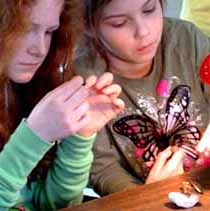 photo of children intent on insect specimens