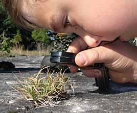 Photo of Nathan Jason-Byerley examining plants with hand lens