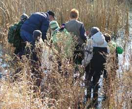 Photo of Macoun Club group wading into the Macoun Marsh, Ottawa
