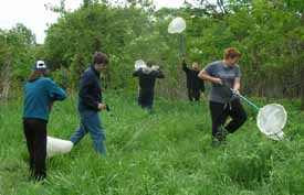 Photo of Macoun members sweep-netting insects in field