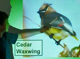 Photo of Carlos pointing out fieldmarks of Cedar Waxwing