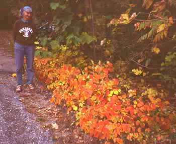 Photo ofBarbara Gartner beside Poison Ivy in autumn