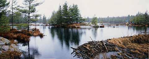 Landscape view of favourite camping pond at Pakenham