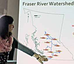 Photo of map of salmon populations in the Fraser River, BC