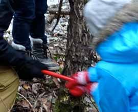Photo of Macoun members cutting a big European Buckthorn with a bow saw