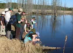 Photo of kids probing pond edge