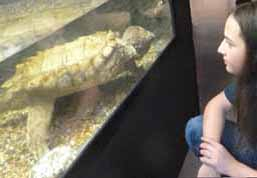 Photo of boy and Alligator Snapping Turtle eyeing each other