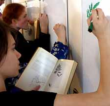 Macouners drawing ferns on whiteboards on the wall
