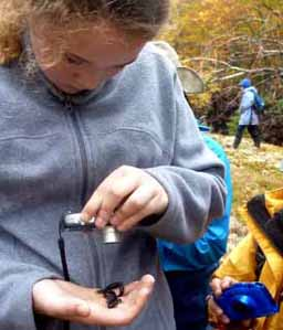 Photo of Macoun member taking picture of salamander in her hand