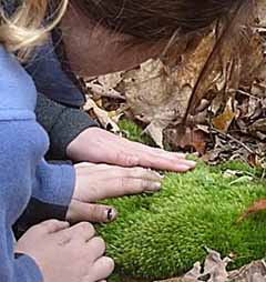 Photo of hands stroking soft moss cushion (Dicranum scoparium)