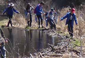 Photo of Macouners crossing beaver dam