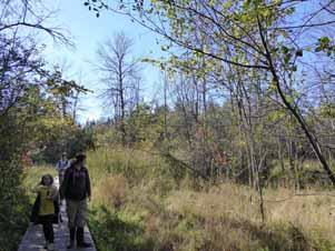 Photo of Macoun members walking on boardwalk through dying Red Ash swamp (Emerald Ash Borer)