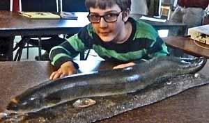 Photo of boy touching model of eel