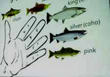 Mneumonic device for the 5 Pacific salmon species