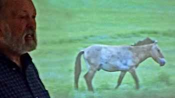 Photo of RRoy John explaining Przewalski's Horse