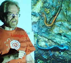 Photo of herpetologist David Seburn with his photos of Red-backed and Blue-spotted Salamanders