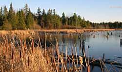 Photo of Sarsaparilla Trail pond