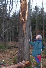 Photo of Diane looking at her broken tree