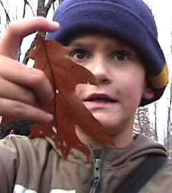 Photo of Red Oak leaf