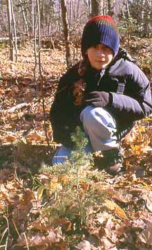 Photo of White Spruce tree