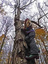 Photo of girl climbing up Yellow Birch