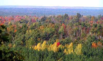 Photo of autumn colours in Renfrew County