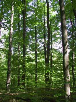 Photo of Frank Ryan city park forest, Ottawa