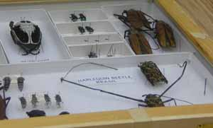 Photo of insect specimen box
