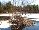 Photo of a beaver lodge