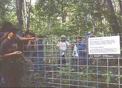 Photo of a deer exclosure