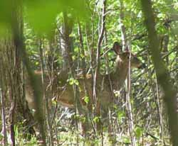 Photo of Deer in forest