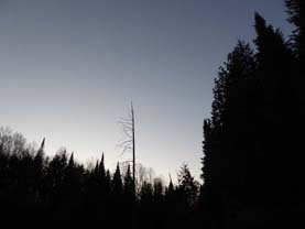 Photo of forest skyline at dusk