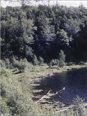 Photo of lake fen at Black lake, Gatineau Park