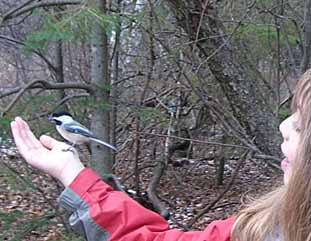 Photo of Chickadee on an empty hand