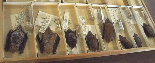 Photo of specimens of Ontario's 8 bat species